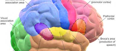 Η αναβλητικότητα έχει «ρίζες» στον εγκέφαλο