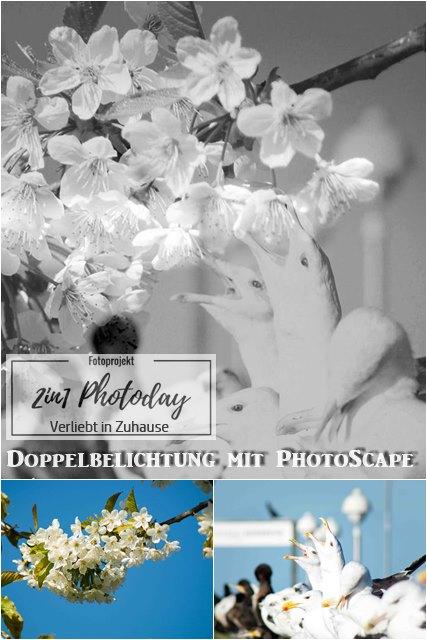 Fotoprojekt 2in1 Mai: Bildbearbeitung mit Photoscape und Doppelbelichtung mit Kirschblüten und Möwen