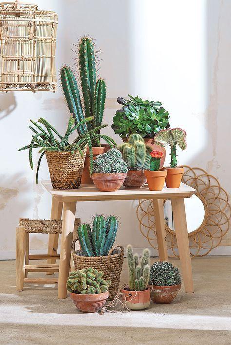 Como escolher o vaso  ideal para cada planta