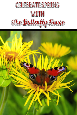 This post includes resources and ideas to go with the book, The Butterfly House, by Eve Bunting.