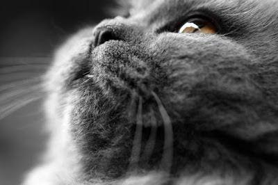 Fotografoa de rostro de gato