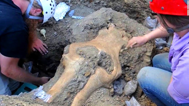 Rare, Complete Mammoth Skull Found in Channel Islands Puzzles Scientists