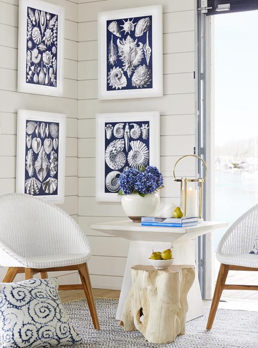 Blue Shell Illustration Wall Art Prints