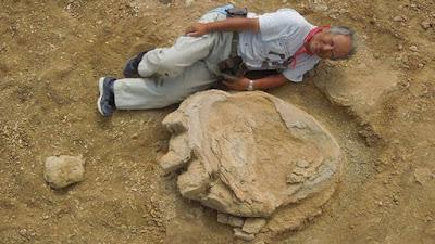 Απολίθωμα γιγάντιας πατημασιάς δεινόσαυρου με μήκος πάνω από ένα μέτρο
