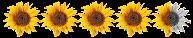 http://blog4aleshanee.blogspot.de/search/label/4%2F5%20Sonnen
