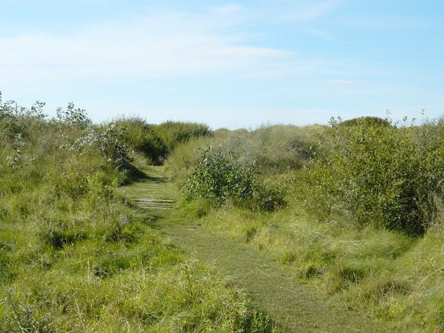Ainsdale Sandhills Nature Reserve