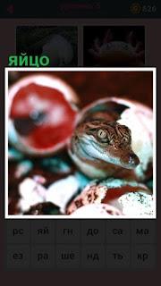 змея в окружении своих яиц