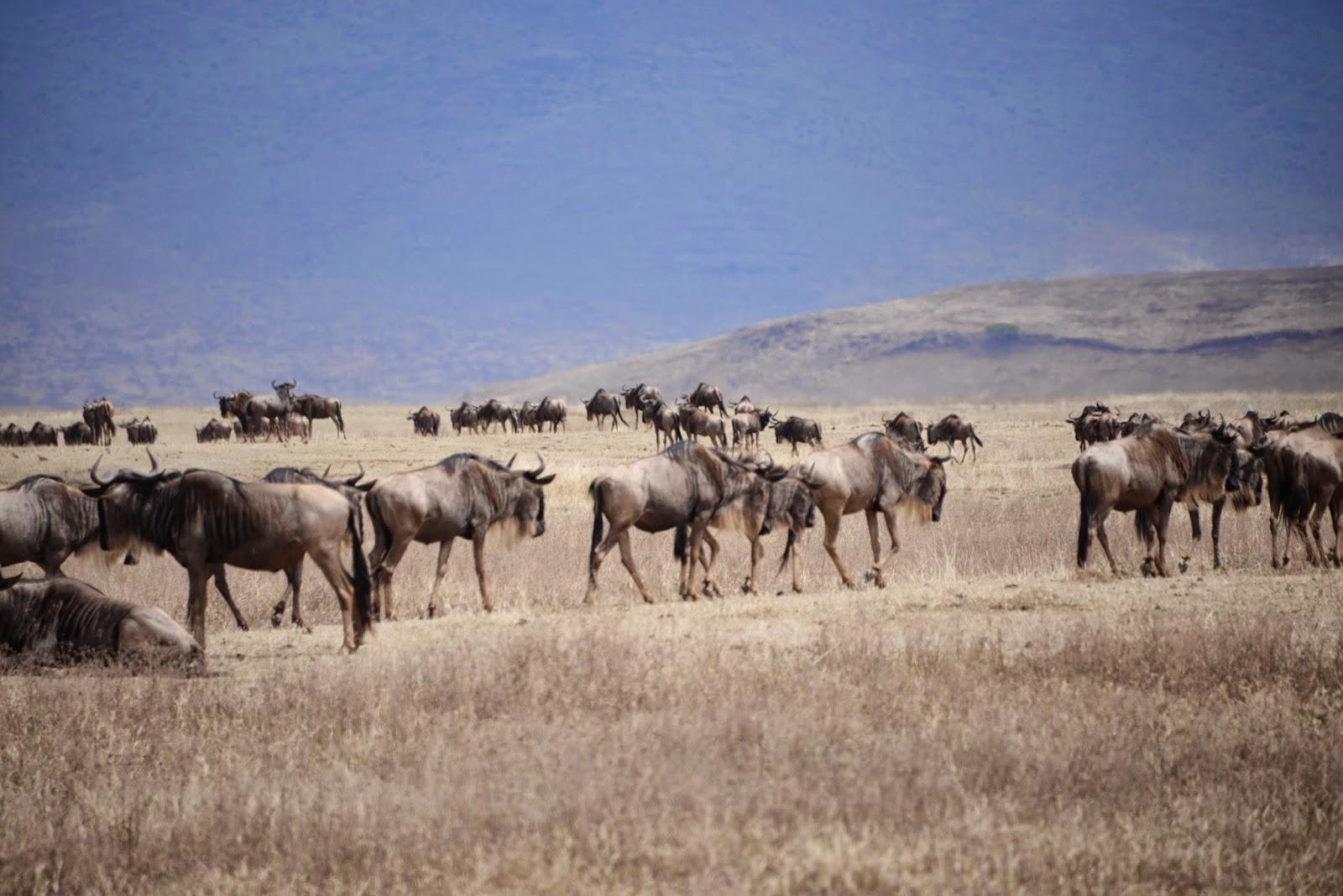 Rencontres zebres