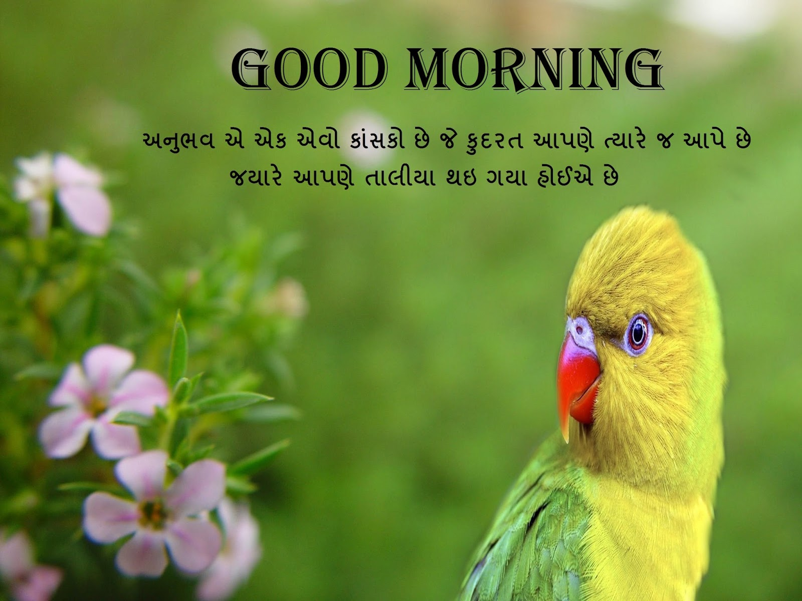 Cute Wallpapers With Quotes Hindi Good Morning Cards Free Online Greeting Cards Festival