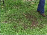 reseeding lawn bare spots