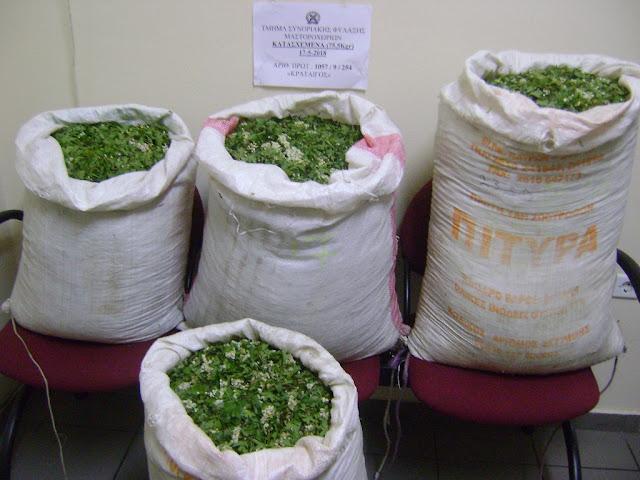 Συνελήφθησαν τρεις αλλοδαποί με 84 κιλά φαρμακευτικά φυτά