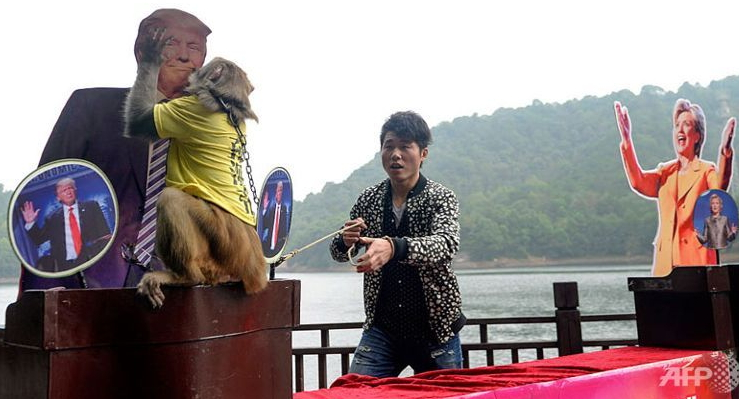 chinese monkey picks donald trump