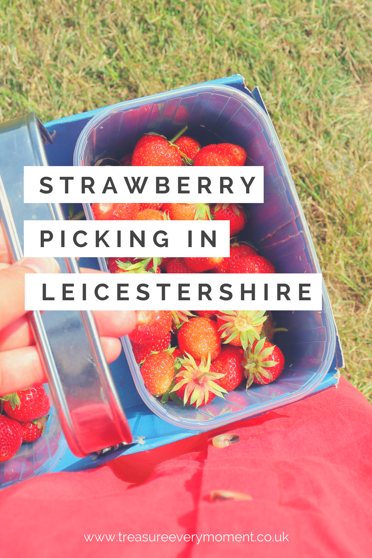 SUMMER: Strawberry Picking at Whetstone Pastures Farm in Leicestershire