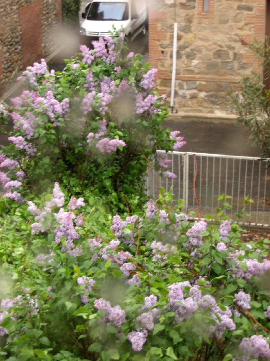 Les balades de lison le jardin de mon grand p re for Au jardin de mon pere camping