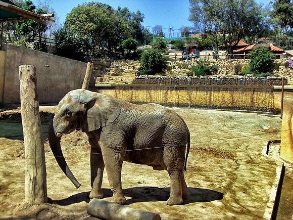 jardim zoológico lisbon