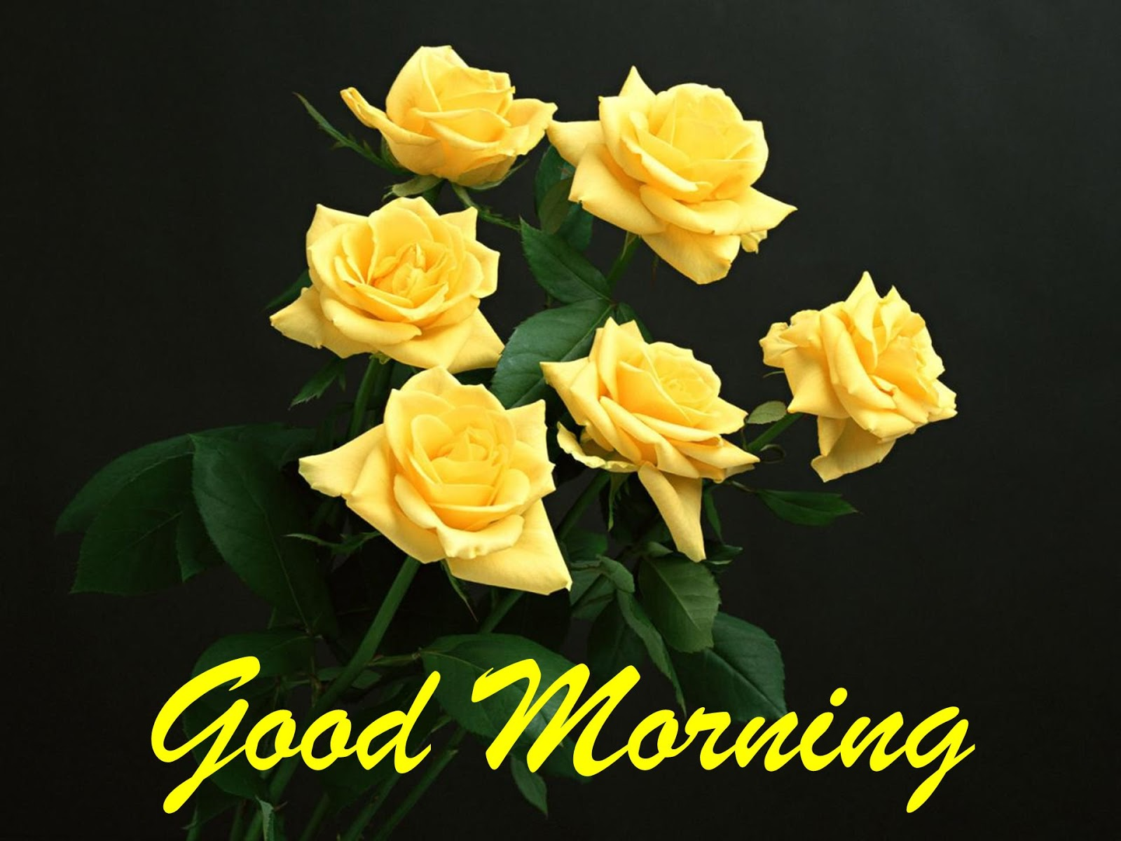 Good Morning Yellow Flowers