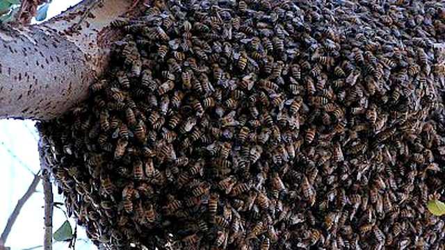 Homem é socorrido em estado grave após ataque de abelhas