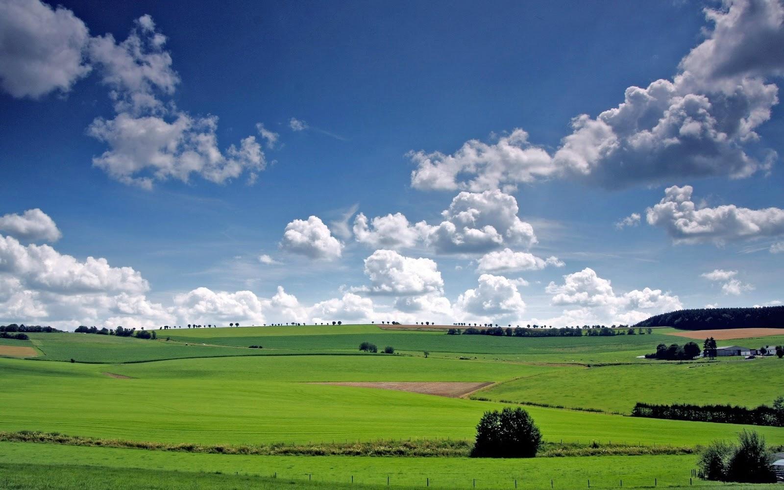 Grass Field Wallpapers