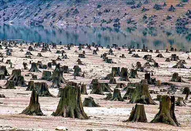 Hutan Gudul - Indonesia Zamrud Khatulistiwa