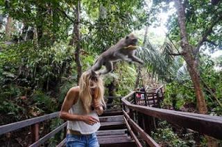 Wenara Wana Ubud Bali