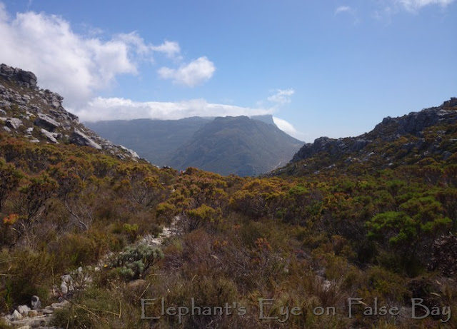 Distant glimpse of Table Mountain