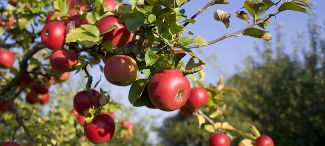 Frutas y fruto