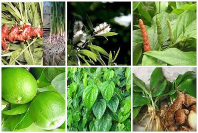 Anda Harus Tau! 10 Resep Obat Tradisional Alami Ini Sangat Ampuh Usir BATUK, Begini Cara Membuatnya!!!