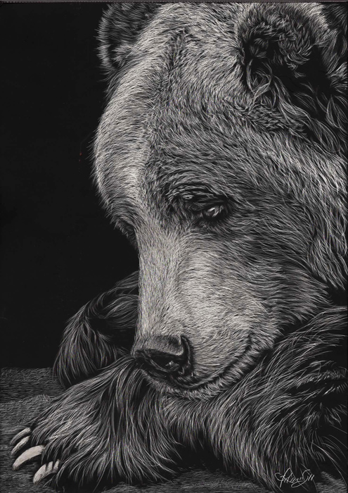 01-Bear-Allan-Ace-Adams-Scratchboard-Drawings-of-Wild-Animals-www-designstack-co