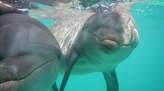 Nade com os golfinhos no Parque Garrafon Natural Reef Park em Cancún