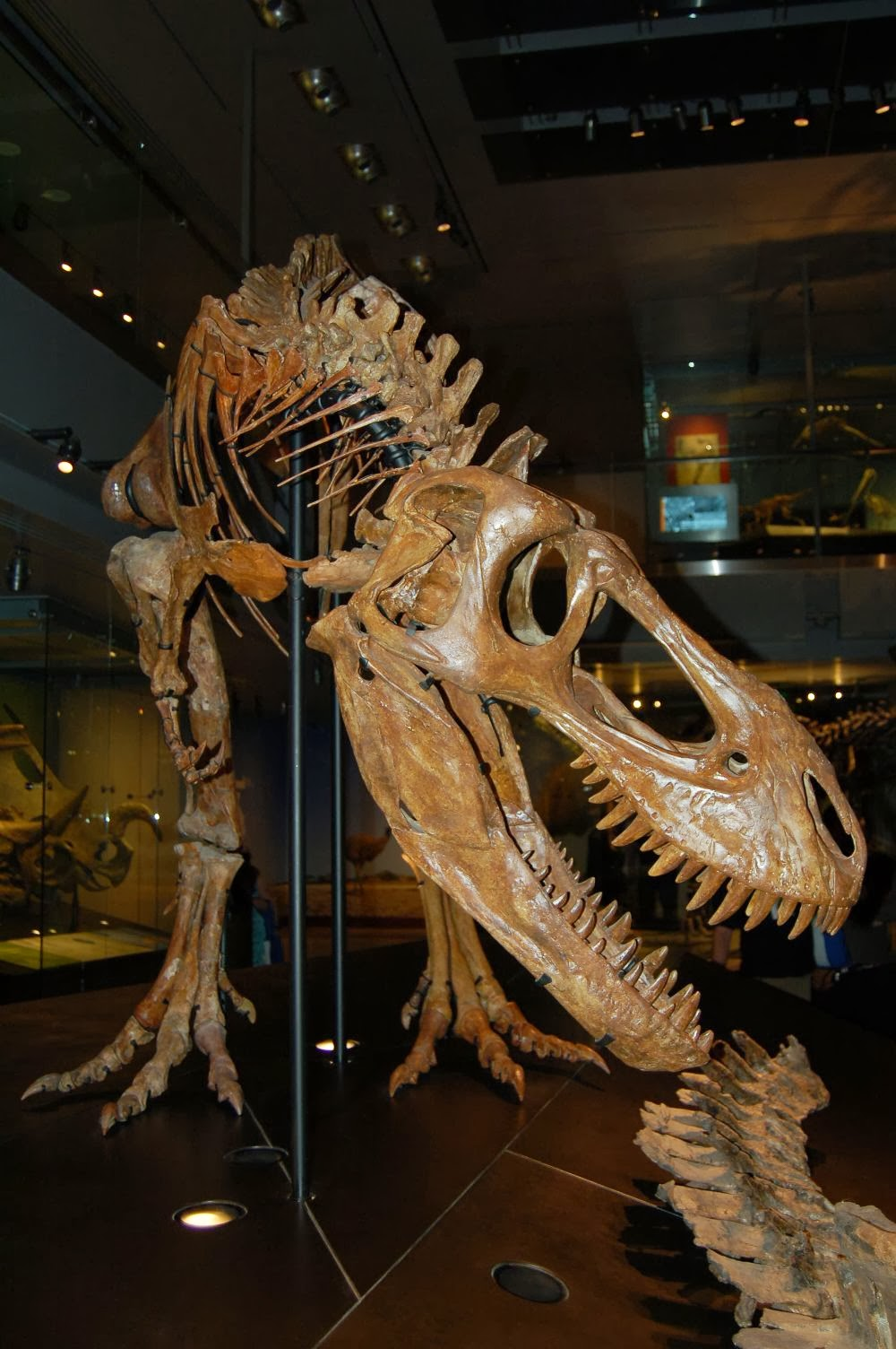 Saurian: Tyrannosaurs at Christmas