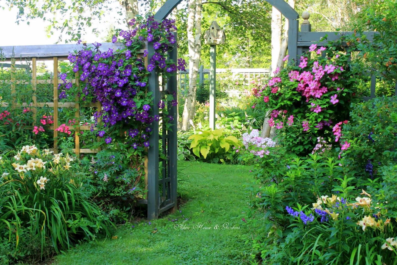 Клематисы и розы в саду фото
