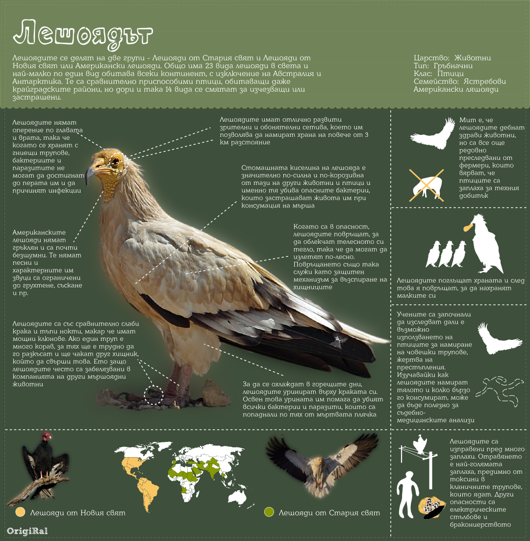 vulture life infographic