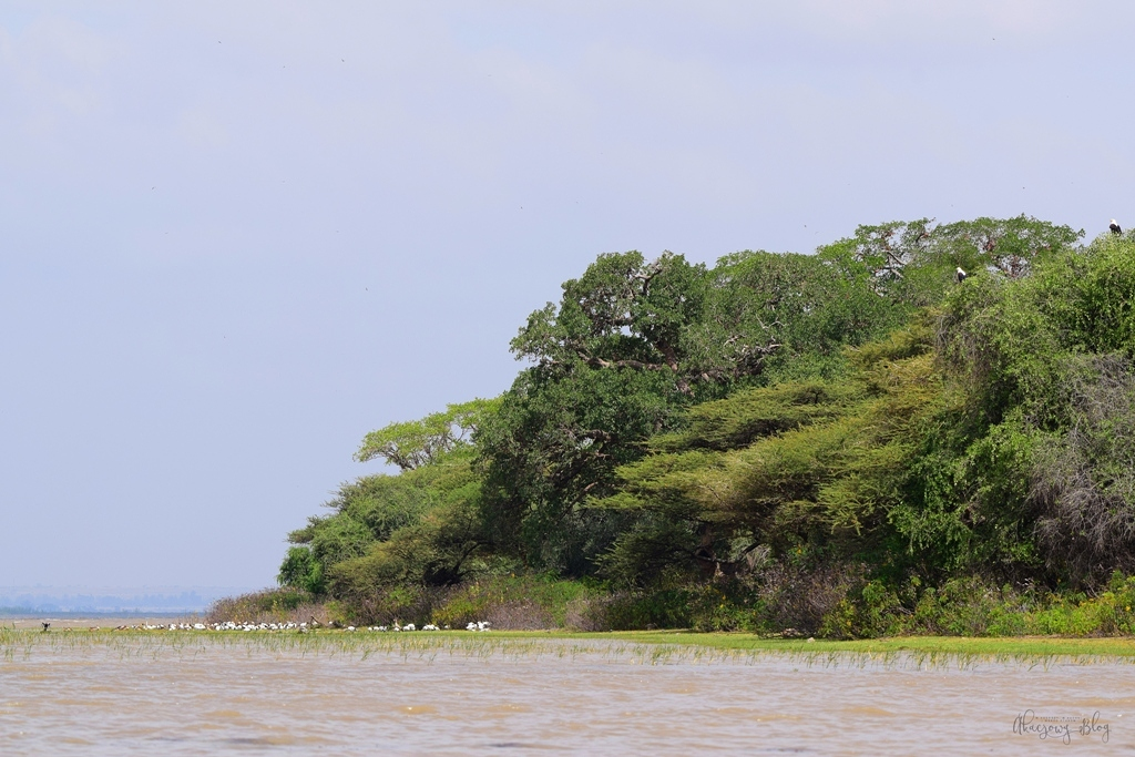 Podróż po Etiopii - cz.6 - nad jeziorem Ziway.