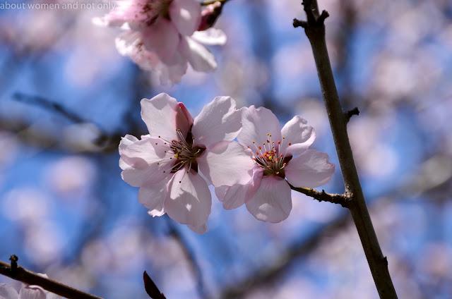 copaci in floare