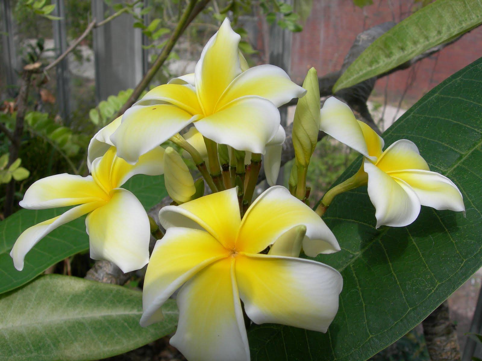 Tropical Rainforest Tropical Rainforest Flora