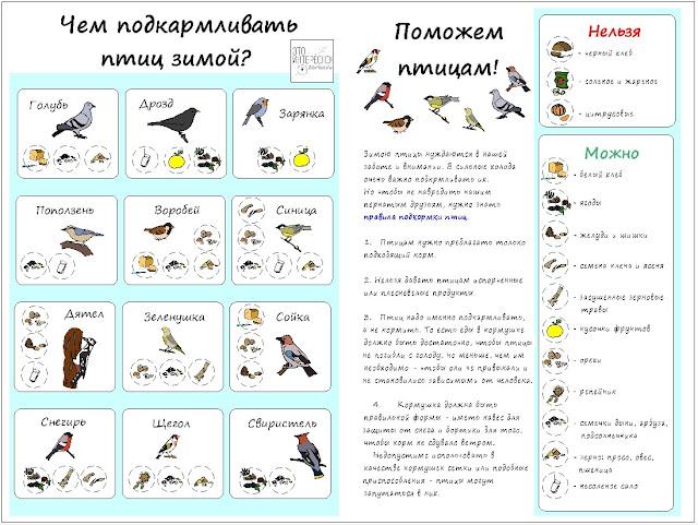 """скачать плакат для детей """"Как кормить птиц зимой"""""""