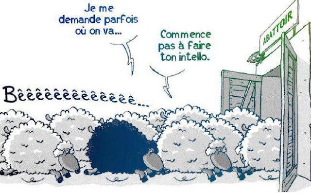 """Résultat de recherche d'images pour """"moutons abattoir"""""""