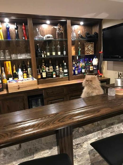 Смешной кот-бармен