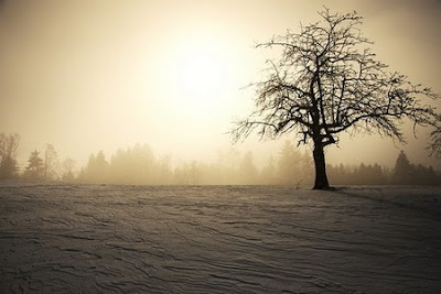 tree in gray days of winter cause seasonal affective disorder