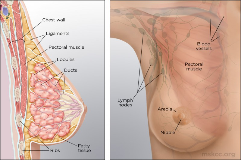 Female Breast Tissue In Males