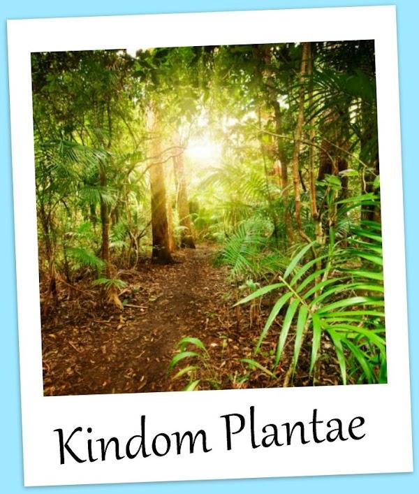 Ciri-Ciri dan Pengelompokan Kingdom Plantae