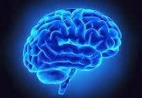 Inside the Brain   Alzheimer's Rading Room
