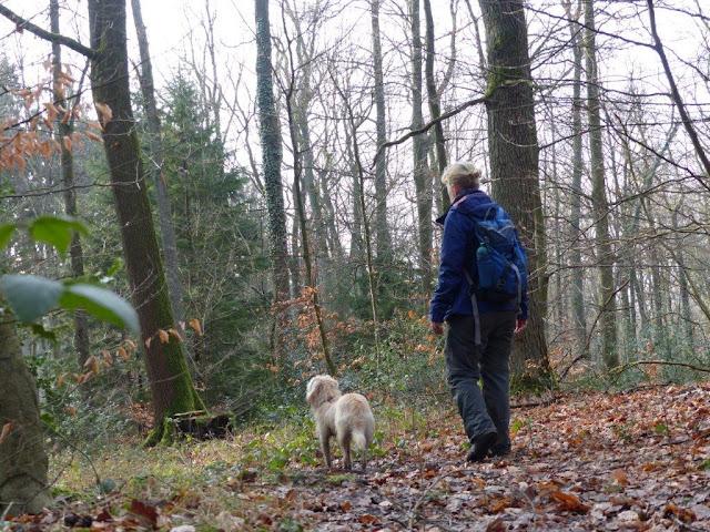 Wanderung Hunderunde Hagen Iserlohn Henkhauser Hasselbachtal Naturschutzgebiet Sturmschäden Friederike