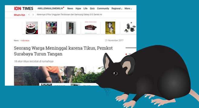 11 Cara Mudah Mengusir Tikus Dari Rumah Dengan Menggunakan Bahan Tradisional
