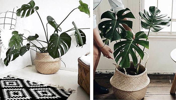 Plantas que crecen sin sol