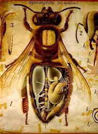 The wonders of bees