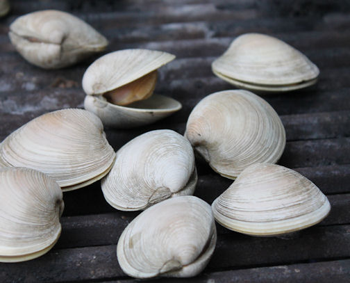 Clams cooking on the grill.
