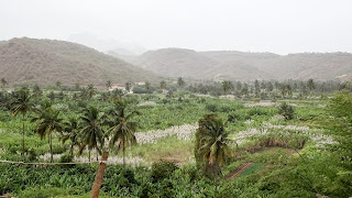 Are to buy palms in Cape Verde