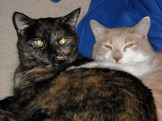 Paisley and Webster: A tortoiseshell cat and cream-and-white tabby cat curled up together