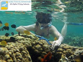 Paket happy snorkeling Pahawang Tanjung Putus Pulau Balak eloratour